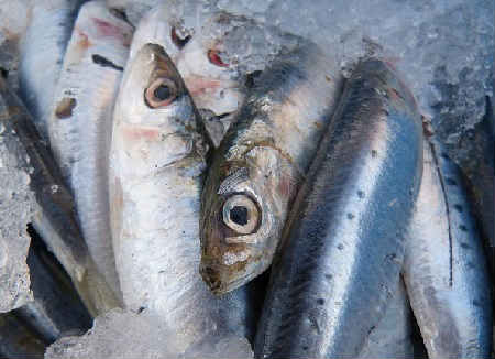 В каких продуктах много железа_рыба и морепродукты