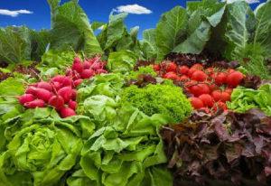 В каких продуктах много железа_листовые овощи