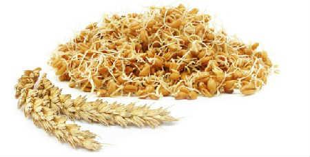 Пророщенная пшеница польза и вред, советы врачей_проростки