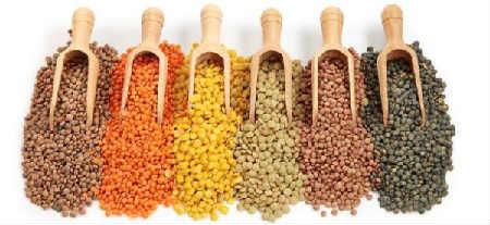 Чечевица: польза и вред, рецепты приготовления_разновидности