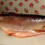 Белорыбица фото что это за рыба