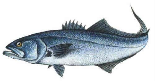 Ryba lufar'2