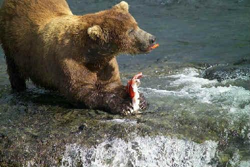 Losos' kakaja jeto ryba8