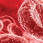 Продукты повышающие гемоглобин в крови_клетки крови