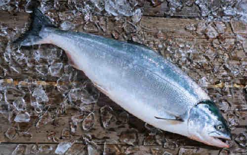 Ryba kizhuch foto1