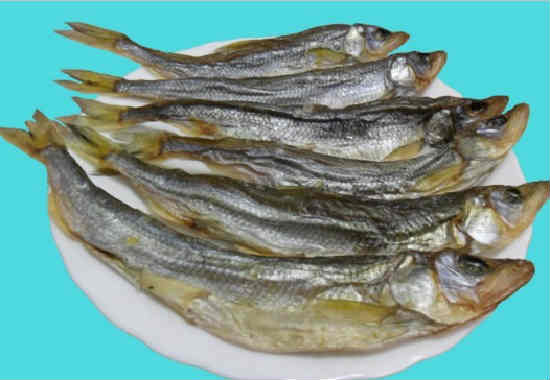 Ryba korjushka foto i opisanie