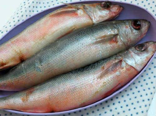 Ryba krasnoglazka foto