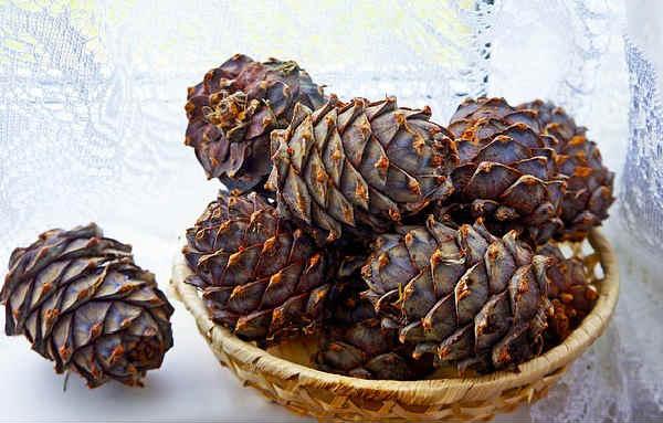 Кедровые орехи польза и вред для организма