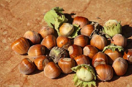 Полезные свойства ореха фундук для женщин