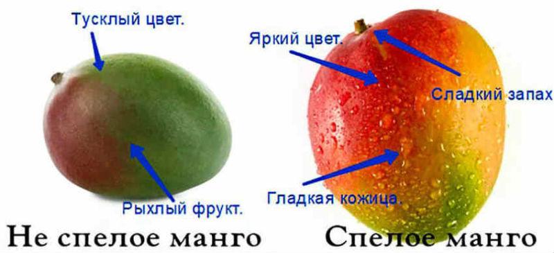 Kak pravil'no vybrat' mango