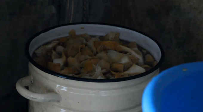 Lisichki marinovannye na zimu7