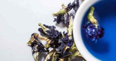 Пурпурный чай чанг шу для похудения: что это за сорт, его состав и применения