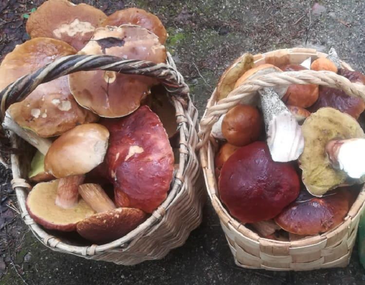 Как мариновать белые грибы1-1